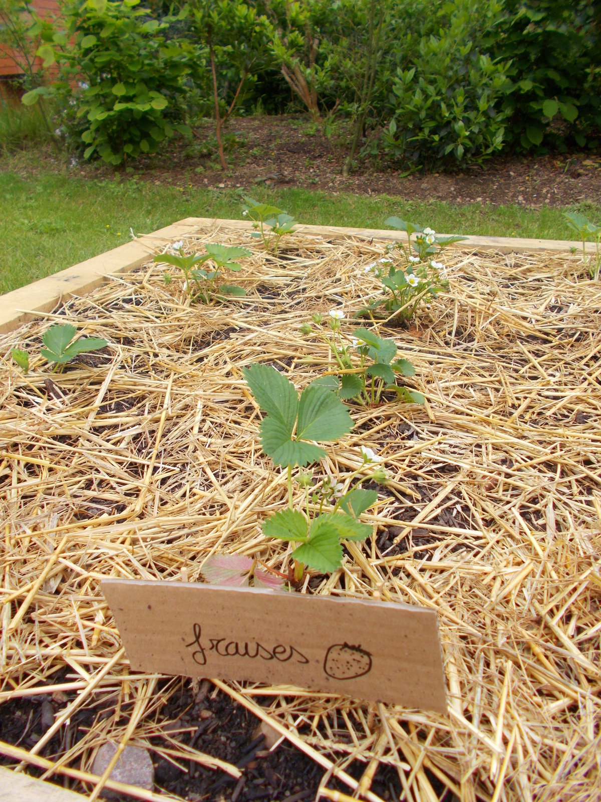 Notre engagement pour l'environnement: les fraises du potager de la Brise de Mer
