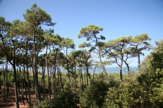 La Forêt de la Pierre Attelée