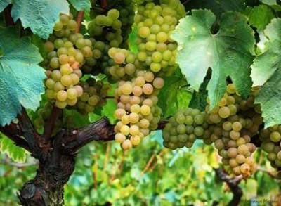 Maison de l'histoire de la vigne et du vin
