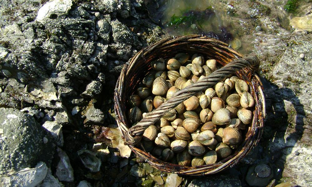 Pêche à pied «Entre coquillages et crustacés»